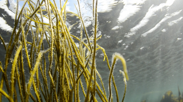 SeaSpaghetti